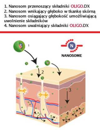 Oligo.DX nanosomy